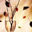 View of glass with some twig in it during fall — Photo