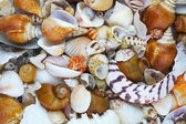 View of different sizes and colors sea shells — Stock Photo