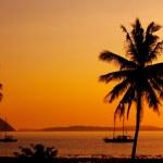 Coconut sunset — Stock Photo