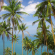View of nice color exotic tropic jungle with some palms — Stock Photo