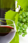 View of wine bottle with vine and full wineglasses on white back — Stock Photo
