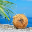 Stock Photo: Close up view of big coconut sprout on the beach