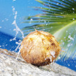 View of coconut getting cracked against shore boulder - Stok fotoğraf