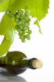 View of corked wine bottle with vine around it on white back — Stock Photo