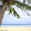 View of nice tropical beach with some palms around — Stock Photo #25995005