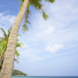 View of nice tropical beach with some palms around — Stock Photo #25997653