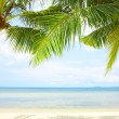 View of nice tropical beach with some palms around — Stock Photo #26020745
