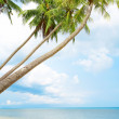 View of nice tropical beach with some palms around — Stock Photo
