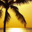 Stock Photo: Tropic sunset