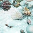Close up view of different kind of shells on splashing water background — Stock Photo