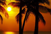 Tropic sunset — Stock Photo