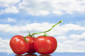 View of three nice big red tomatoes — Stock Photo