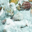 Stock Photo: Close up view of different kind of shells on splashing water background