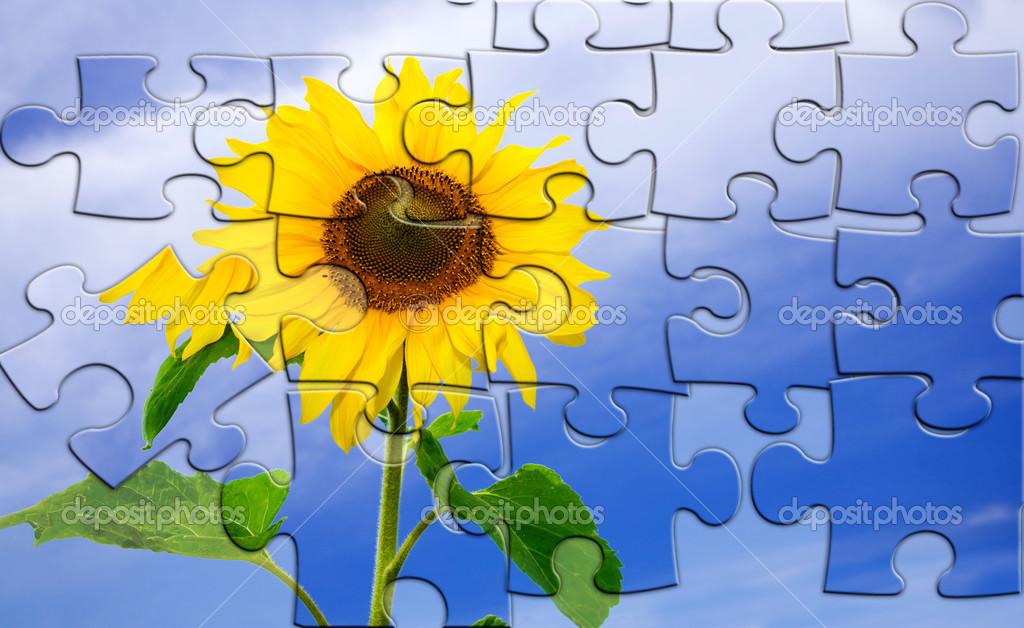 Quebra-cabeça De Girassol Fresco Agradável No Céu Azul De