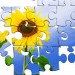 Puzzle of nice fresh sunflower on blue sky back — Stock Photo