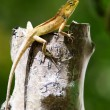 Stock Photo: View of nice colorful lizard in summer environment