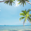 View of nice tropical beach with some palms around — Stock Photo #26156743