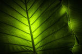 Close up view of tropical plant on color back — Stock Photo