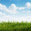 View of nice fresh green grass and blue sky — Stock Photo