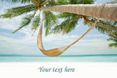Banner.view of nice hummock with palms around in tropical environment — Stock Photo
