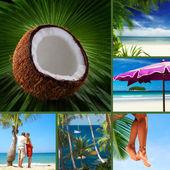 Tropic — Stock Photo