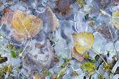 Folhas congeladas — Foto Stock