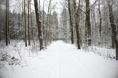 Path in the woods in winter — Stok fotoğraf