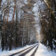 Path in the woods in winter — Stock Photo