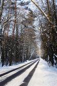 Cesta v lese v zimě — Stock fotografie