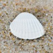 Close up to shell — Stock fotografie