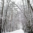 Path in the woods in winter — Stockfoto