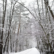 Path in the woods in winter — Stock Photo #33144765