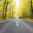 Road in forest — Stock Photo #33815131
