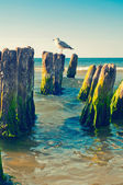 Seagull on stump — Stockfoto