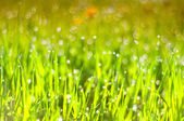 Tropfen tau auf dem gras — Stockfoto