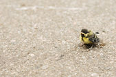 Nestling on the pavement — Stock Photo