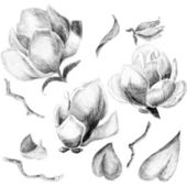 Flower sketch set — Stock Photo