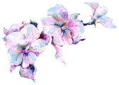букет цветов петуния эскиз — Стоковое фото