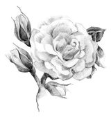 Flower rose sketch — Stock Photo