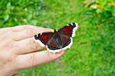 Butterfly brown on hand — Stock Photo