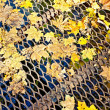 Stock Photo: Maple leaves on lattice bridge