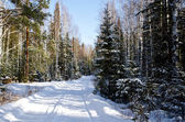 Narrow road in the winter forest — Stock Photo
