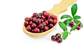 Lingonberry in a wooden spoon — Stock Photo