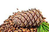Cedar nuts with a cone and a sprig — Stock Photo
