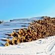 Stock Photo: Timber in snow on sunny day