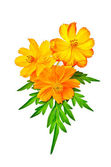 Kosmeya yellow and orange with leaf — Stock Photo