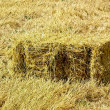 Bale of straw — Stock Photo #19629781