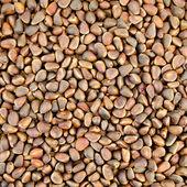 Cedar nuts texture — Stock Photo