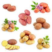 Potatoes different set — Stock Photo