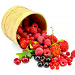 Berries different in a birch tueski — Stock Photo